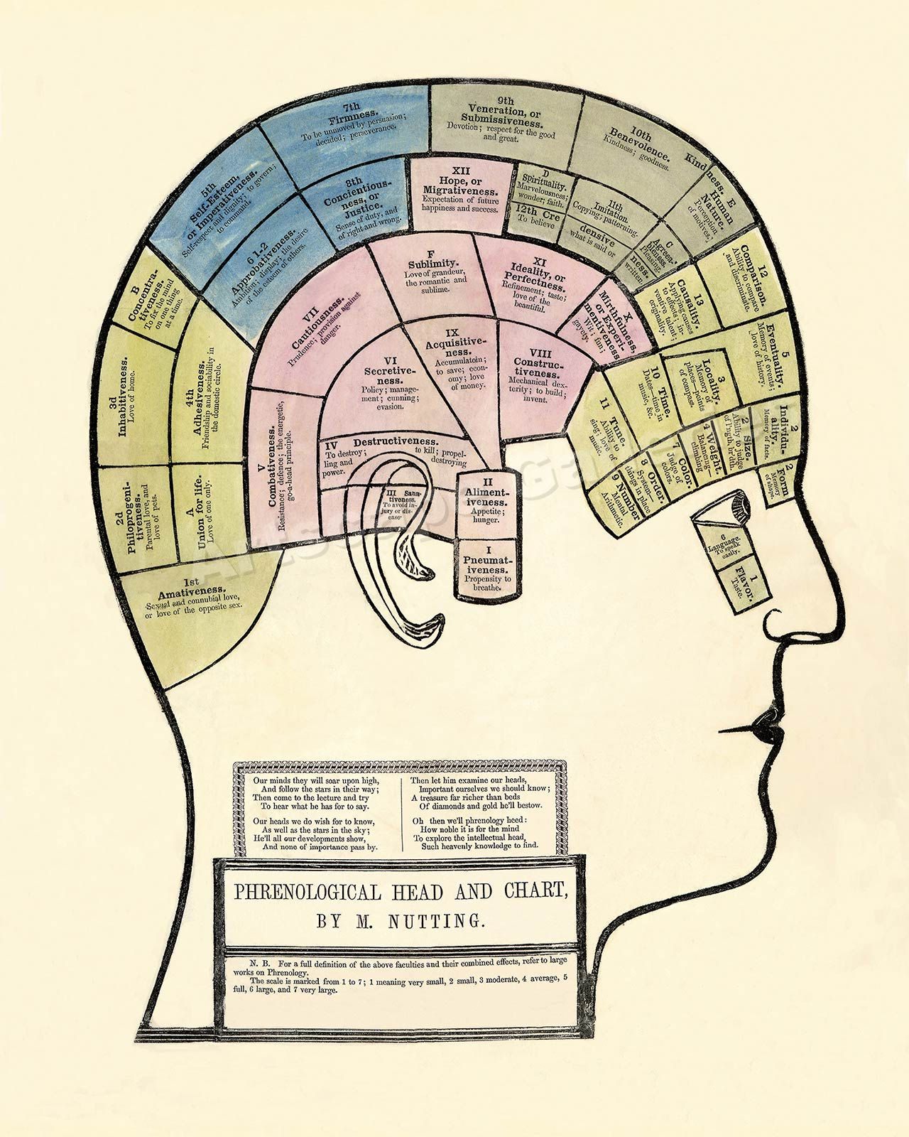 Details About Phrenology Chart 1857 Vintage Style Medical Print 20x24